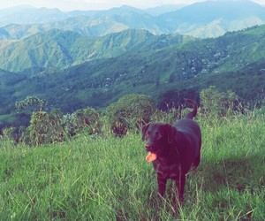dog, naturaleza, and paisaje image