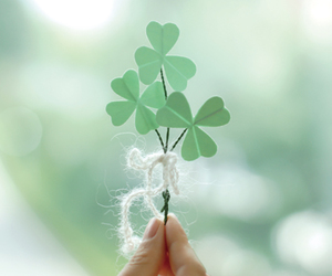 photo, clover, and hand image