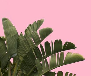 plants and pink image