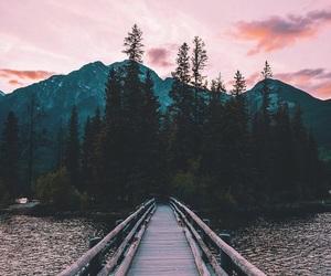 nature, photography, and bridge image