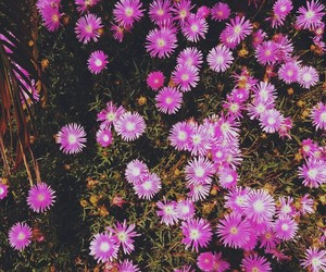 flowers, liss, and pink image