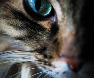 cat, eye, and animal image