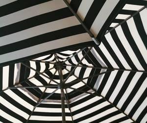 black & white and umbrellas image