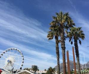 beautiful, palmtrees, and view image