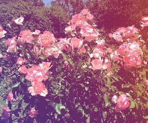 floral, pastel, and rose image