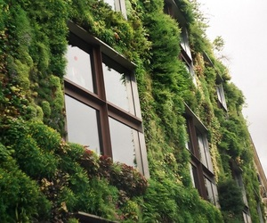 green, plants, and windows image
