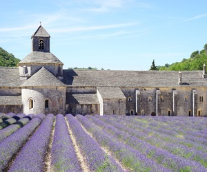 france, lavender, and provence image