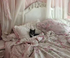 cat, pink, and bed image