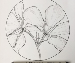 art, black and white, and drawings image