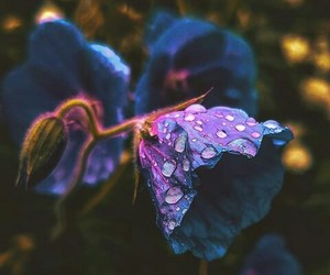 flower, photography, and purple image