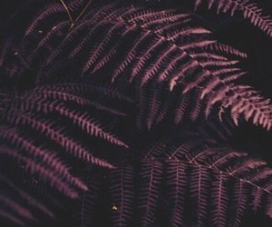 nature, aesthetic, and purple image