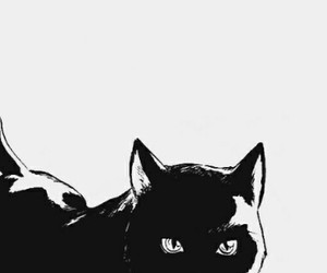 cat, manga, and black cat image