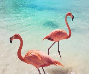 pink, animal, and beach image