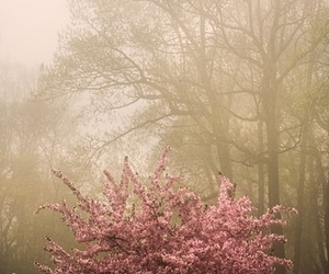blossom, nature, and pink image