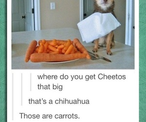 animals, carrots, and chihuahua image