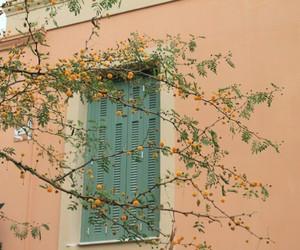 aesthetic, flowers, and orange image