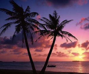 beach, sunset, and palms image