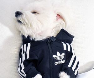 dog, adidas, and cute image