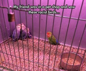 funny, birds, and animal image