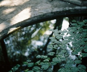 green, nature, and water image