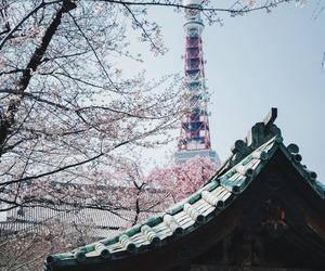 japan, japão, and tokyo image
