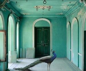 peacock, photography, and animal image