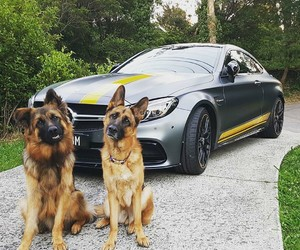 benz, dog, and german shepherd image