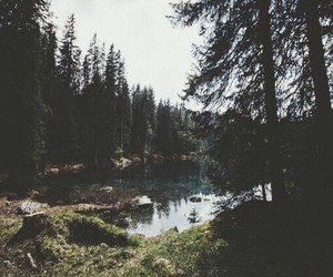 forest, alone, and lake image