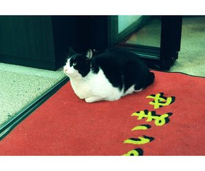 cat, film, and japan image