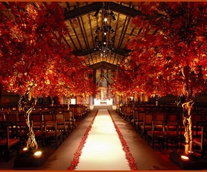 wedding, orange, and tree image