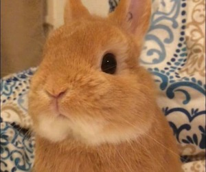 animals, bunnies, and bunny image