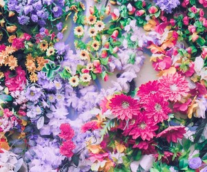blossom, spring, and colour image
