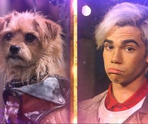 carlos, dog, and dude image