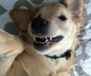dog, animals, and puppy image