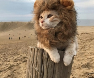animals, beautiful, and funny image