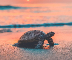 animal, beach, and turtle image