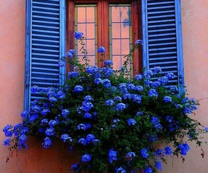 flowers, blue, and window image