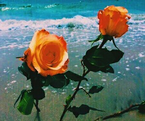 rose, flowers, and beach image