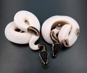 snake, animal, and theme image