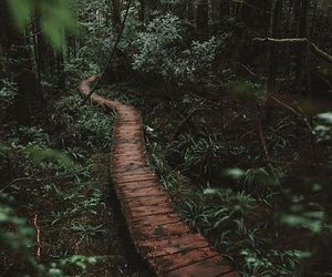 forest, wood, and green image