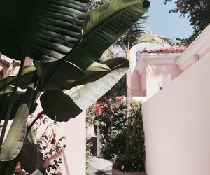 summer, pink, and plants image