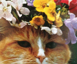 cat, flowers, and kitty image
