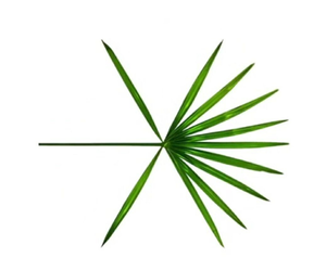 exo, comback, and exo header image