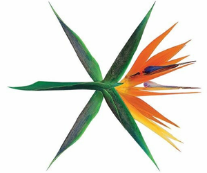 comeback, exo wallpaper, and exo header image