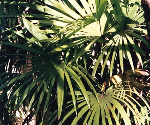 leaves, palm tree, and summer image