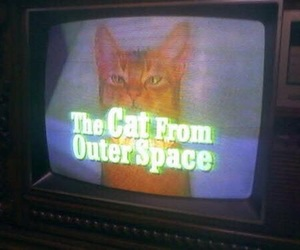 cat, tv, and space image