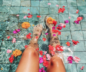 flowers, summer, and water image