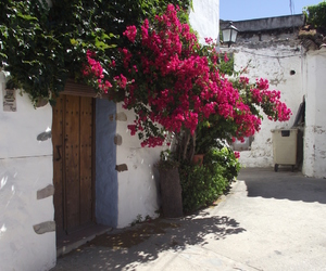 andalucia, beauty, and bloom image