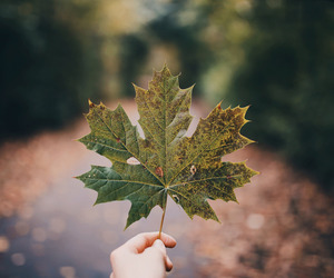 autumn, autumnal, and nature image