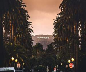hollywood and palms image